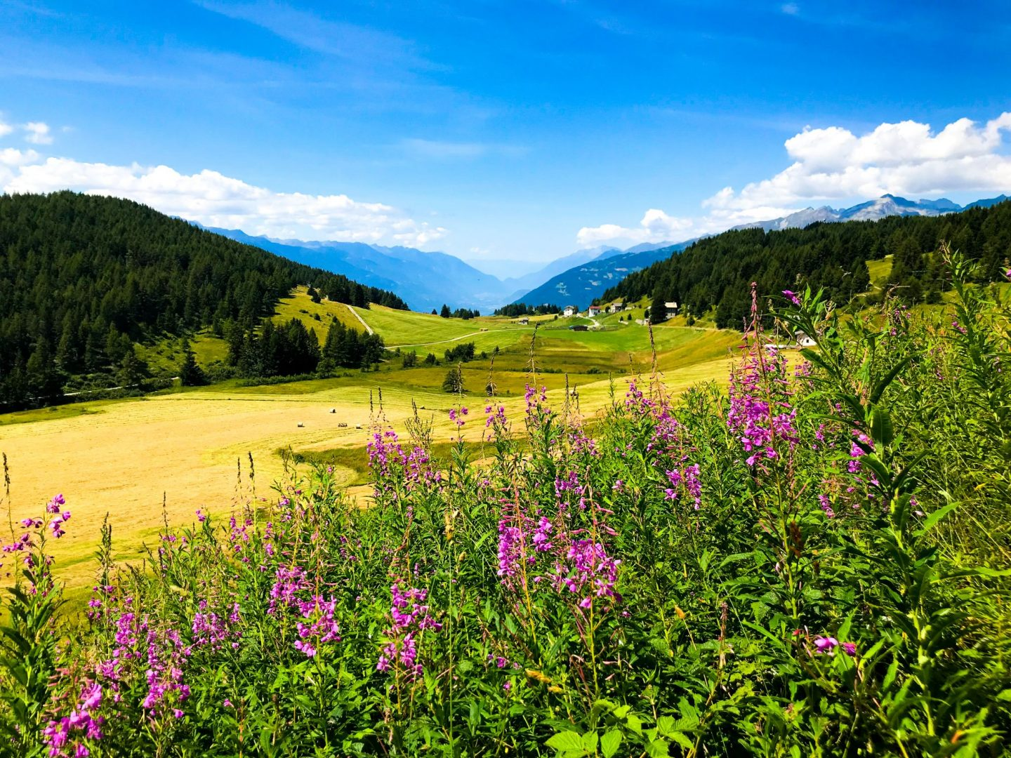 Green landscape with moutain range surround Tirano